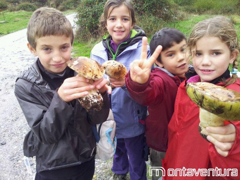 Setas encontradas en la excursión